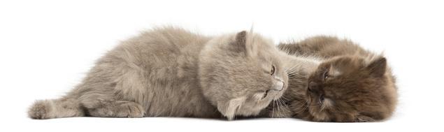zwei Kitten