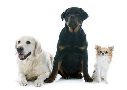 Zusammenleben mit Hunden