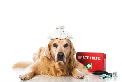 Wissen Hund Gesundheit