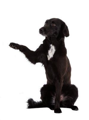 Hund Erziehung