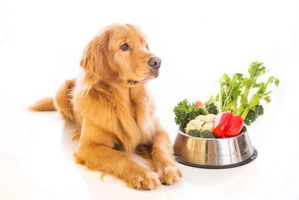 Hunde fressen auch Gemüse