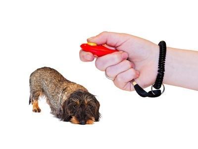 Klickertraining mit Hunden