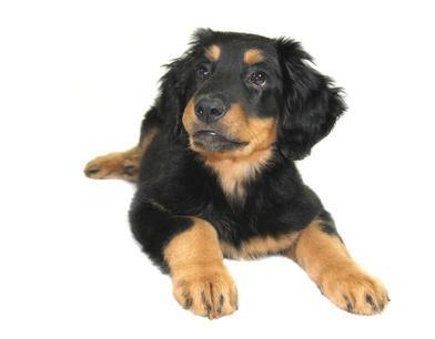Anschaffung Hund: Hundesteuer