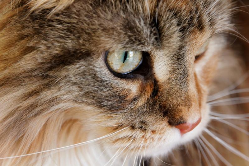 Sozialverhalten Katze