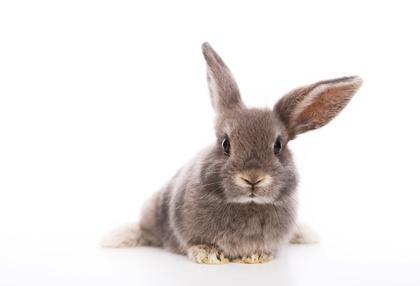 abstammung vom kaninchen. Black Bedroom Furniture Sets. Home Design Ideas