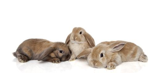 Anschaffung Kaninchen