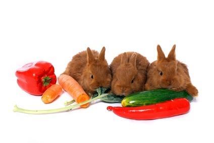 Kaninchen und Gemüse
