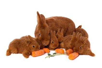 kaninchen zutraulichkeit kaninchen z hmen und zutraulich machen. Black Bedroom Furniture Sets. Home Design Ideas