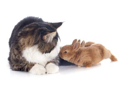 Katze Kaninchen