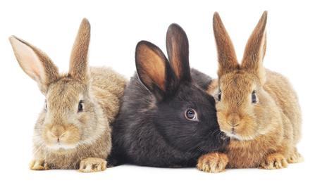 Sozialverhalten von Kaninchen