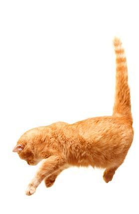 Katzen fallen auf die Pfoten