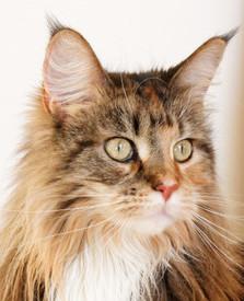 Katze Ohren